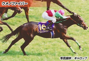 ウメノファイバー(育成馬)