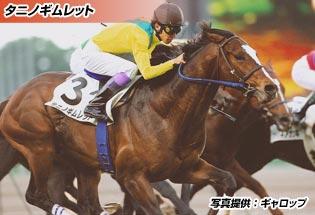 タニノギムレット(育成馬)